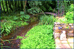 Photo of Stream